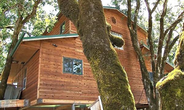 дом на дереве фото 5