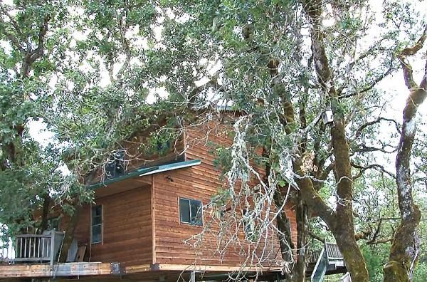 дом на дереве фото 7