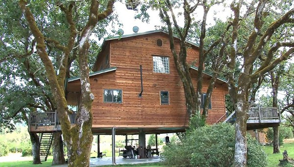 дом на дереве фото 3